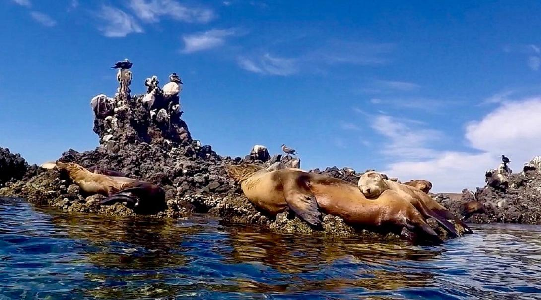 Marine Conservation volunteers observe and monitor seals and birds in Mexico.